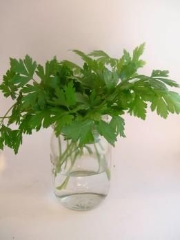 parsleyjar